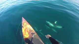 Paddle Boarding With A Friendly Pod Of Dolphins