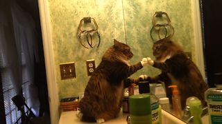 Cats Are Weird - Video