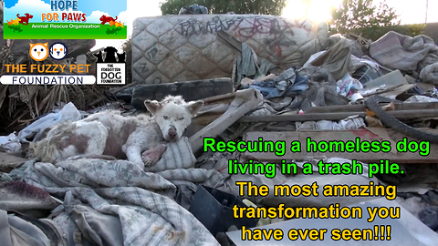 A homeless dog living in a trash pile gets rescued, and then does something amazing! Please share.