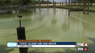 Algae cleanup: what can be done - Video