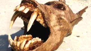 10 Mysterious Creatures That Could Be Real - Video