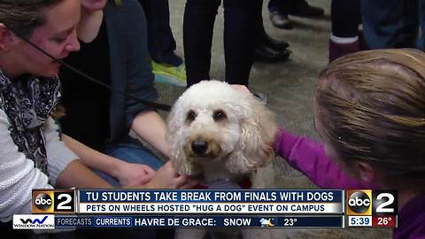 Dogs help Towson University students unwind during finals