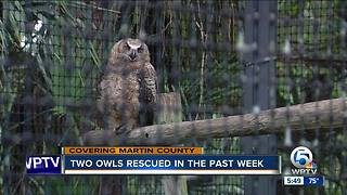 Two owls rescued in Martin County - Video