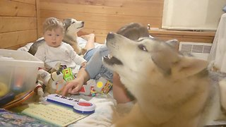 Baby entertained by howling husky concert