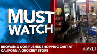 Browsing dog pushes shopping cart at California grocery store - Video