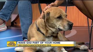 Rescues in Action: Gigi - Video