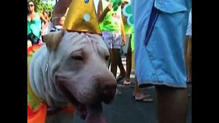 Rio Dog Carnival - Video