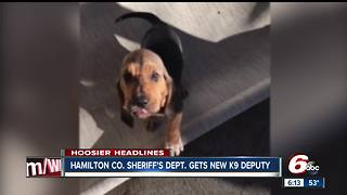 8-week-old K9 officer joins Hamilton County Sheriff's Office - Video