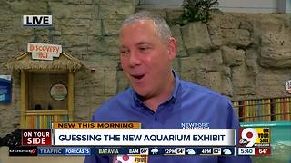 'Mysterious' new exhibit is coming to the Newport Aquarium - Video