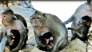 Life Of Monkey Cry For Call King Where To Go - Video