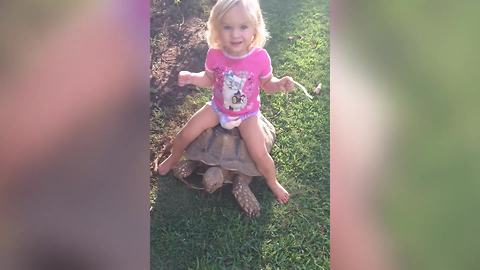 A Tot Girl Rides A Turtle In A Backyard