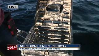 Stone Crab season open again: How to catch stone crabs - Video