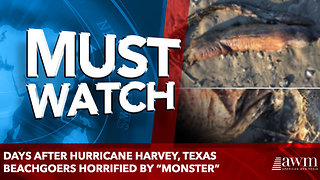 "Days After Hurricane Harvey, Texas Beachgoers Horrified By ""Monster"" - Video"