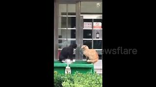 Cats fall into dustbin during fight - Video