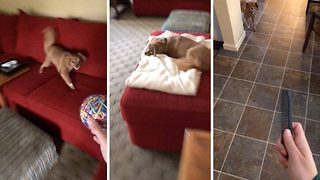 Hilarious video shows nervous dog who is terrified by everything