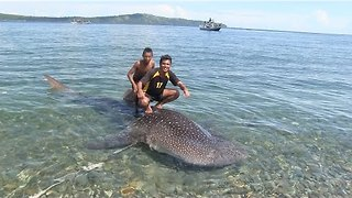 Fisherman Catch Baby Whale Shark, Tourists Bargain for Its Release - Video