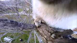 Squirrel Steals GoPro and Records an Adventure - Video