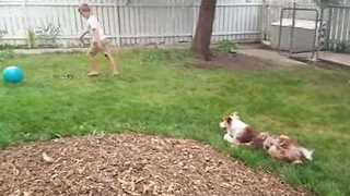 Border Collie Shows Off Her Soccer Skills - Video