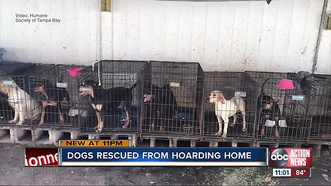 Humane Society of Tampa Bay rescues 21 dogs from hoarding situation