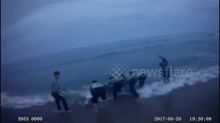 Police and fishermen rescue a whale shark stranded on beach - Video