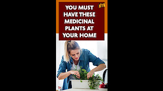 Top 4 Medicinal Plants That You Should Have In Your Home *