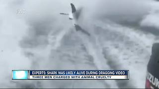Experts: Shark was likely alive during dragging video - Video