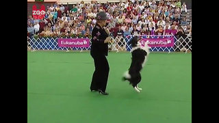 Funny Dog Dancing - Video