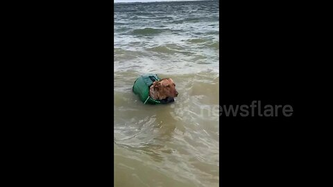 Dog dressed as mermaid spotted swimming in Texas lake
