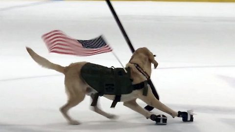 Cold dog, new tricks: Dog rescued from death row becomes 'World's first' ice skating pooch