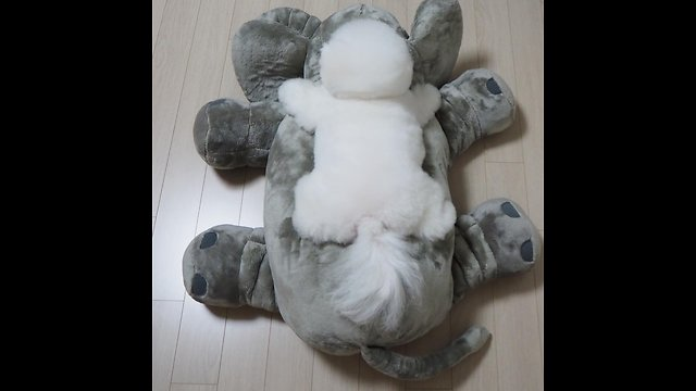 Puppy adorably stretches out on top of stuffed animal - Video