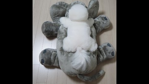 Puppy adorably stretches out on top of stuffed animal