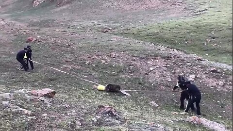 Police officers remove plastic bucket stuck on brown bear's head in China's Qinghai