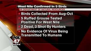 State: 5 ruffed grouse test positive for West Nile Virus