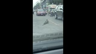 5-foot-long monitor lizard gets stuck in middle of busy road - Video