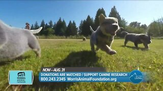 Matched Donations, Support Canine Research // Morris Animal Foundation