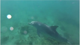 Curious dolphin swims directly underneath paddleboard