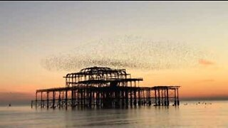 Thousands of birds fly over pier during beautiful sunset