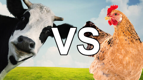BEEF vs CHICKEN - Which is Better for Type 1 Diabetes?