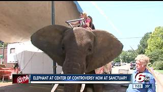 Elephant at center of Morgan County festival controversy confiscated - Video