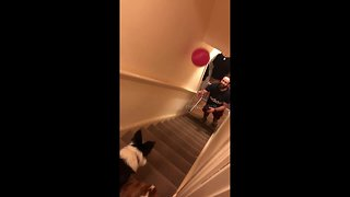 This border collie lets nothing past her! Dog is natural born goalkeeper