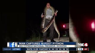 Naples man captures 16-foot python - Video
