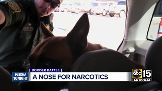 Border Patrol canines stopping drugs smuggled into southern Arizona