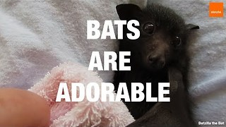 Bats Are One of the Cutest Animals Out There - Video