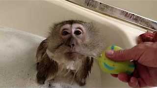 Monkey Enjoys Bubble Bath