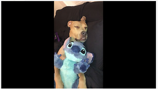 Pitbull cuddles his stuffed animal to sleep