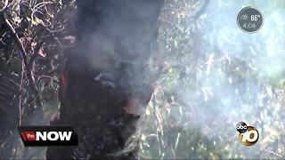 Residents worried about homeless fires in Hillcrest - Video