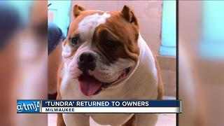 Family reunited with stolen dog - Video