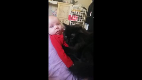 This super sweet kitty preciously cuddles with a newborn baby!