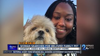 Woman searches for beloved pet