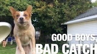 Adorable Dogs Just Can't Catch Anything - Video